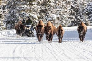 Ski the Rockies und Yellowstone Snowmobiling